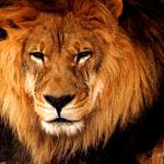 dark-lion